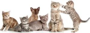 Chats gardiennage nounou à Mennecy